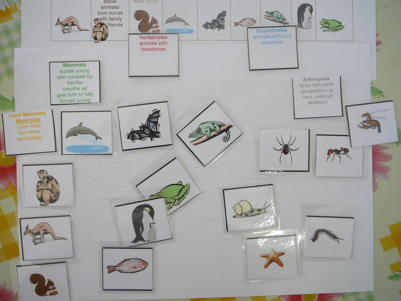 Animal Classification Chart And Cards