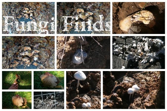 Fungi Finds