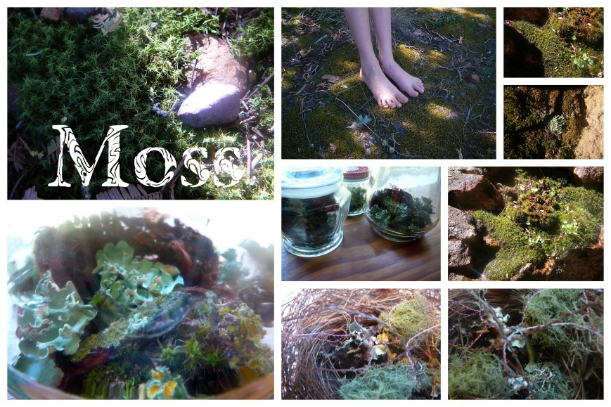 Moss Lichen & Mushrooms1