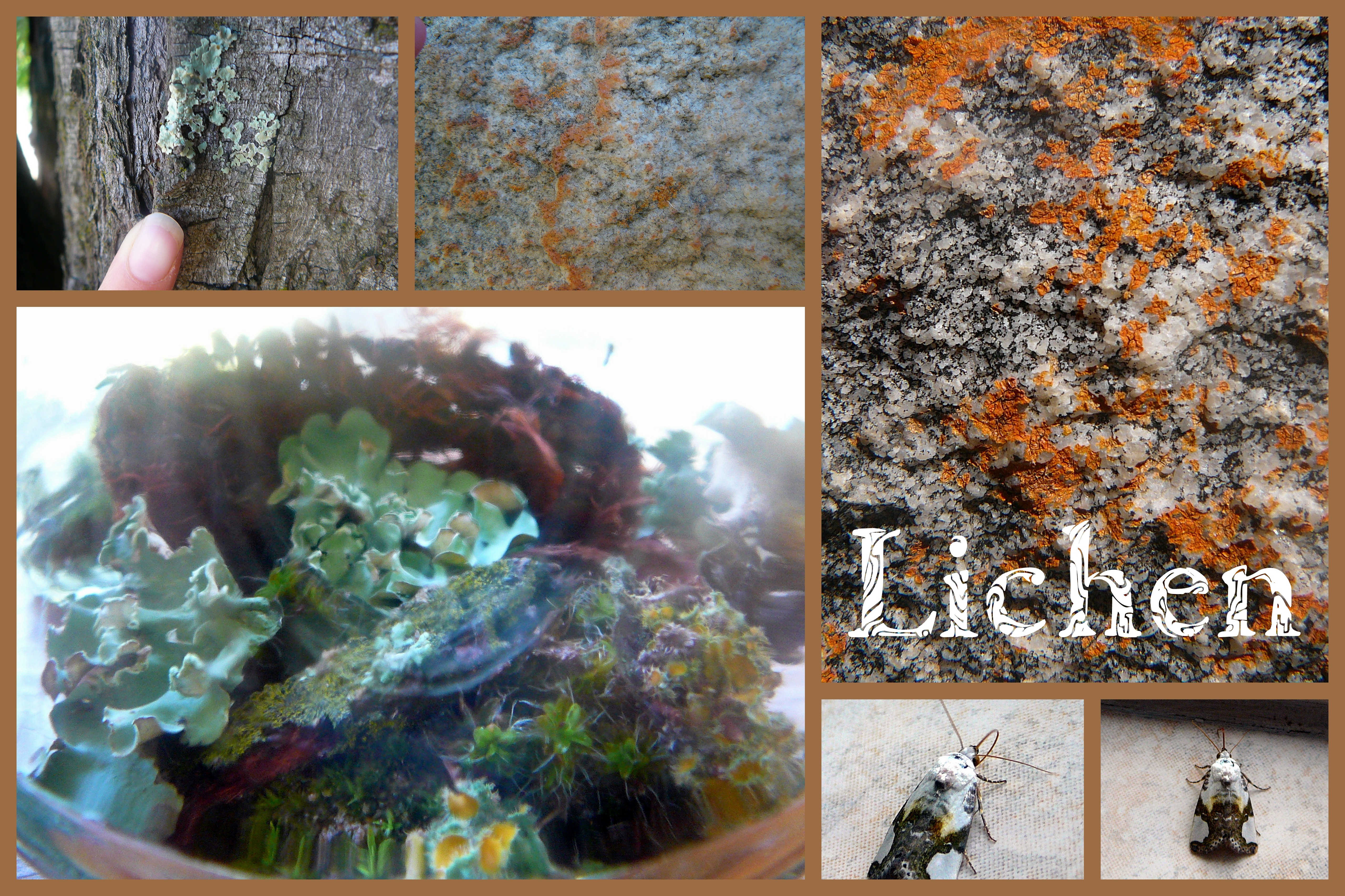 Lichen Practical Pages