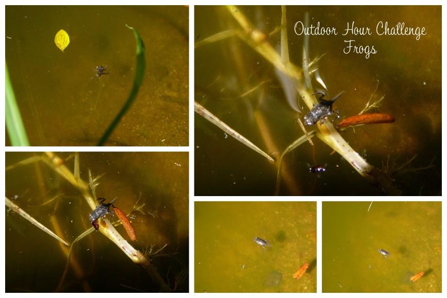 lara tadpoles