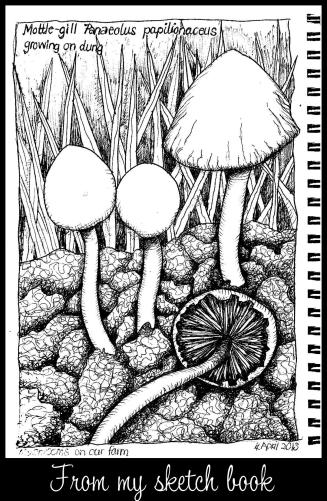 mushrooms 001