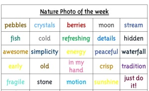 Nature Photo of the Week Chart