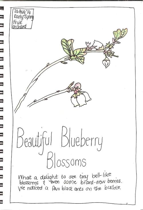 Sketch Book Blossoms 002