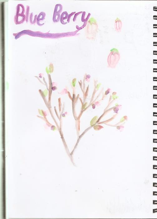 Sketch Book Blossoms 003