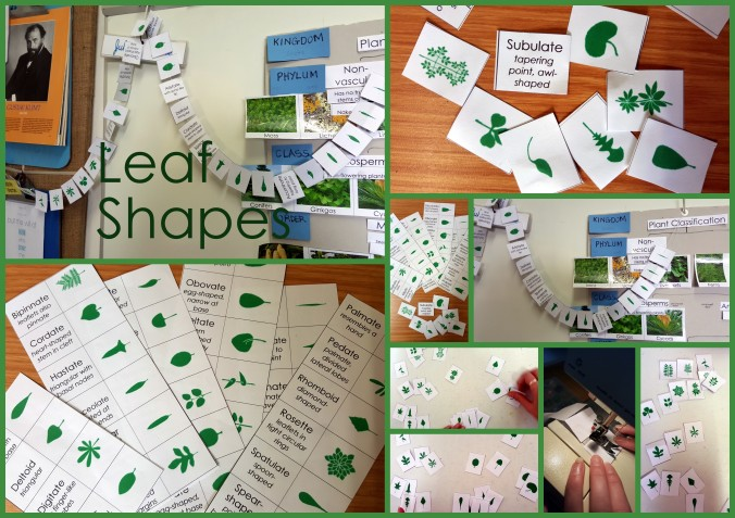 Homeschool leaf