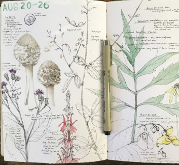 Lara Gastinger, sketchbooks, nature sketchbook, nature journal, sketchbook journal, nature sketchbook journal, Sketchbook Conversations